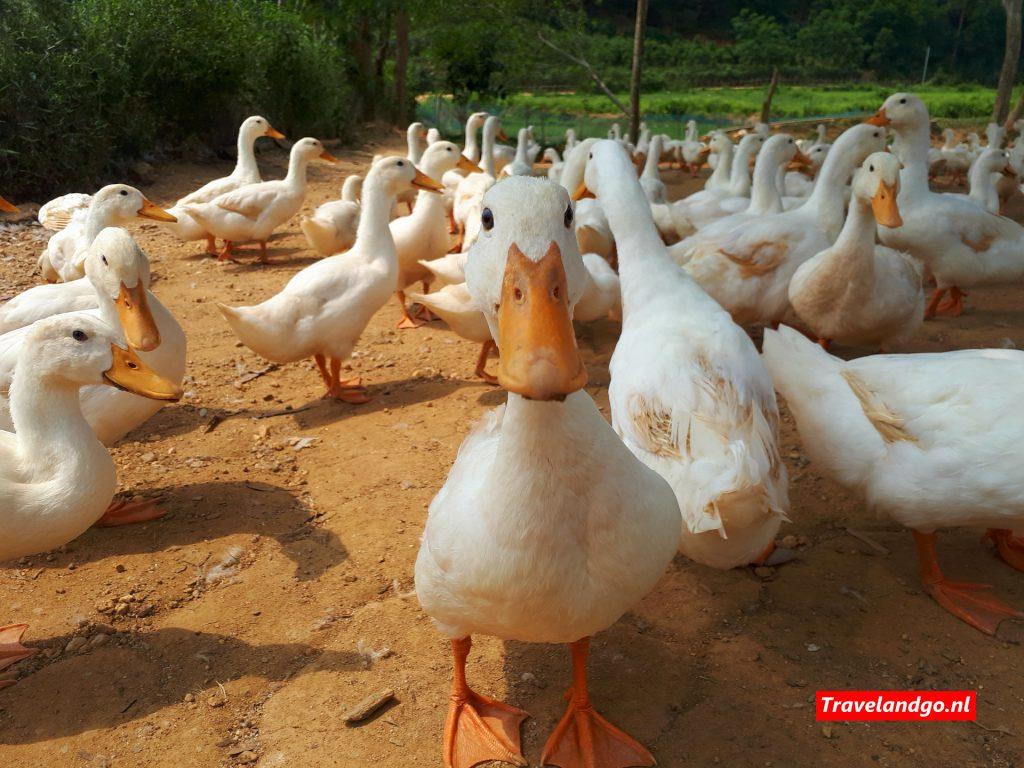 Phong Nha - Duck Stop