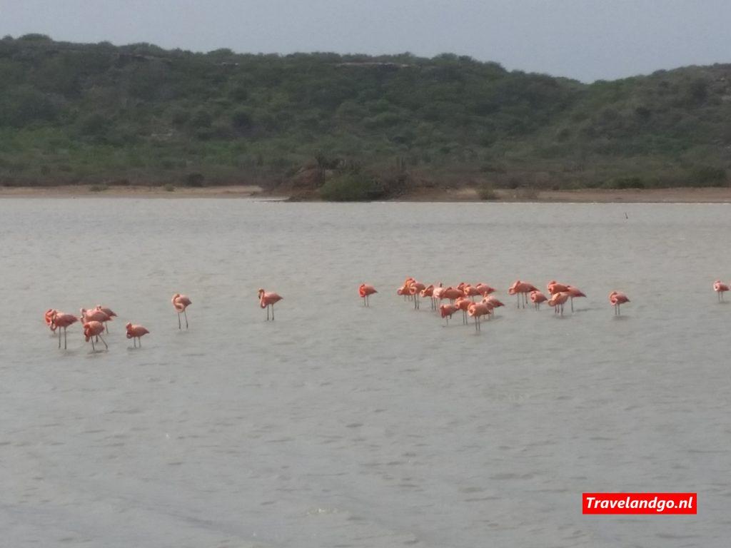 curaçao reisgids - flamingo