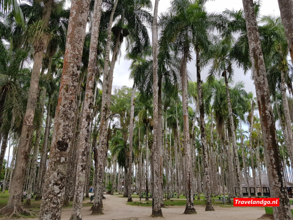Palmentuin Paramaribo